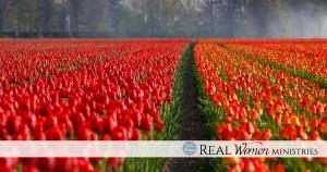 Holland fields day 7